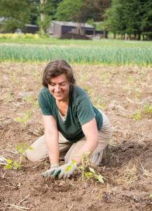 Shari planting tomatoes