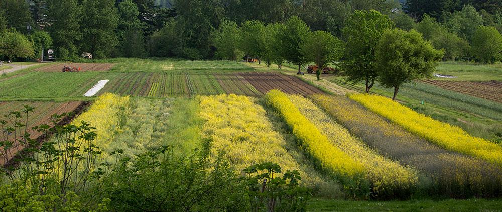 home-slide-fields